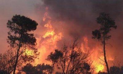967,25 Hektare Lahan Sumatera Selatan Hangus Dilalap Api