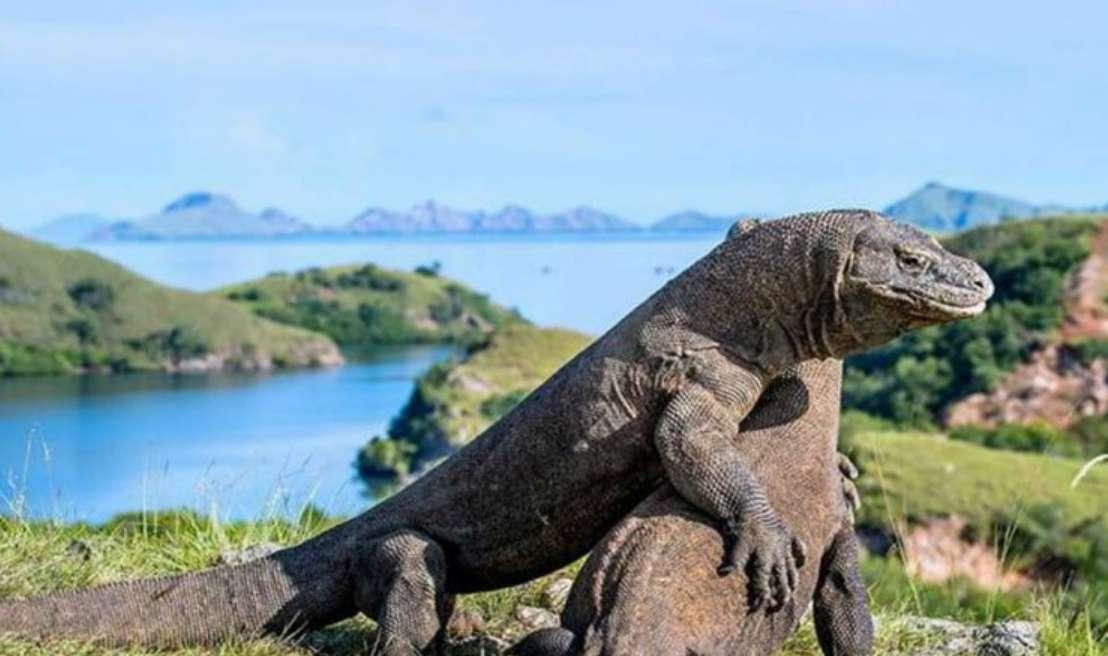 Masyarakat Lokal Minta UNESCO Turun Tangan Soal Jurassic Park NTT